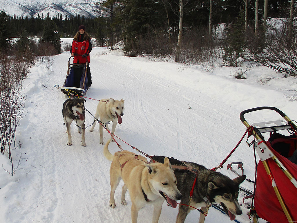 Yukon-Trip, Hundeschlittenfahren